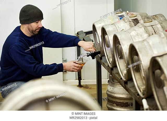 Man drawing some beer from a metal keg in a brewery for testing