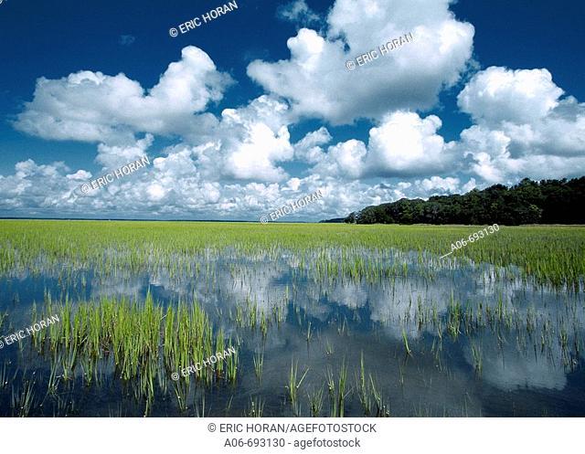 Cumulus clouds and Spartina grass