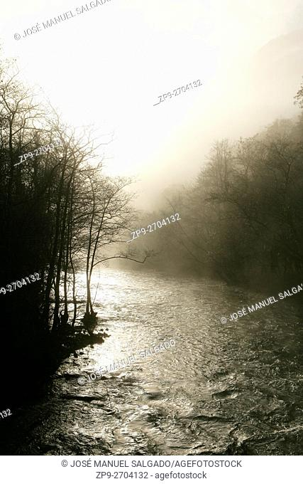 Twilight and mist at river Eume, National Park Fragas do Eume, Galicia, Spain