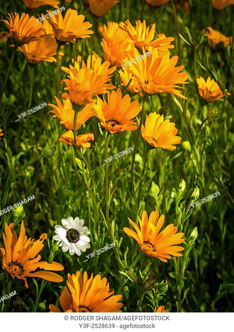 Indigenous flowers and plants. South Africa