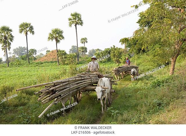 Burmese farmers with loaded oxen carts on Inwa island  Ava  at the Ayeyarwady River near Amarapura, Myanmar, Burma