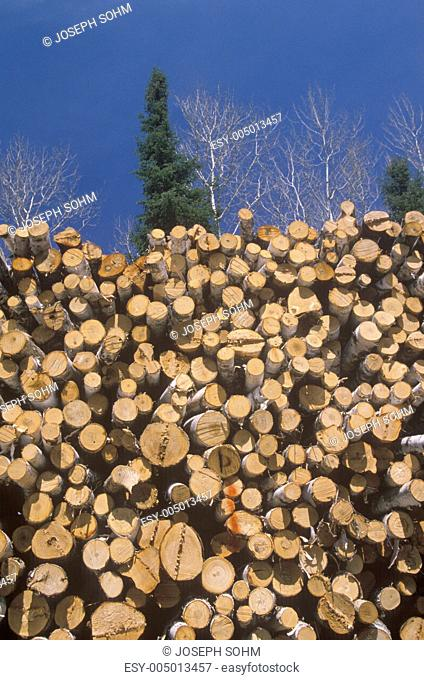 Recently cut logs awaiting processing at a Wisconsin mill