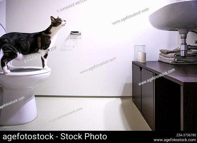 Cat on a human toilet in a modern bathroom