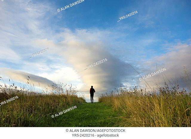 Saturday, 16th, August, 2014, Cowpen Bewley Woodland Park, Billingham, England, UK. Weather: Jogger at sunrise on bright and chilly Saturday morning in north...
