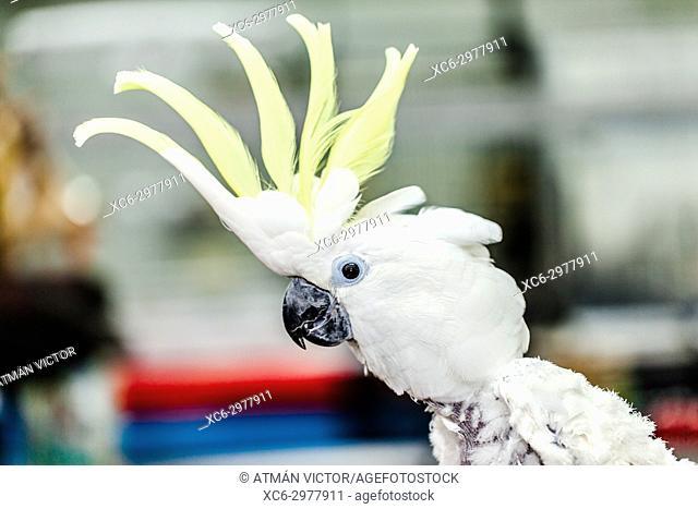 Close up of cockatoo