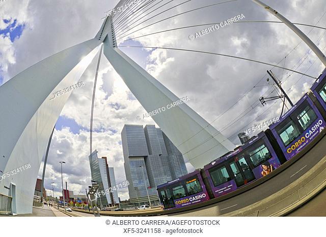 Erasmus Bridge, Nieuwe Maas River, Modern Architecture, Rotterdam, Holland, Netherlands, Europe