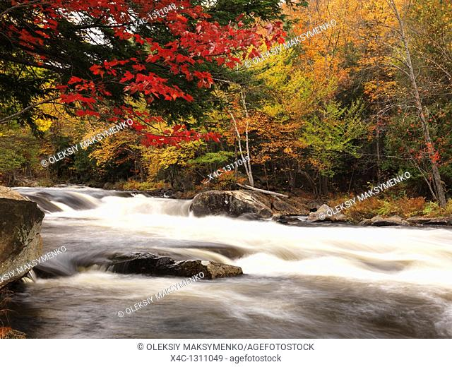 Beautiful fall nature scenery of Oxtongue river rapids  Algonquin, Ontario, Canada