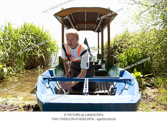 18 May 2019, Saxony, Moritzburg: The gondolier Jens Friebel kneels on his gondola on the bank of the Dippelsdorfer Teich, a converted Spreewald barge