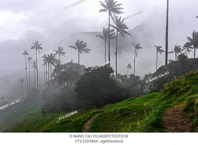 The Cocora Valley (Spanish: Valle de Cocora) is a valley in the department of Quindâ. šo, just outside the pretty little town of Salento