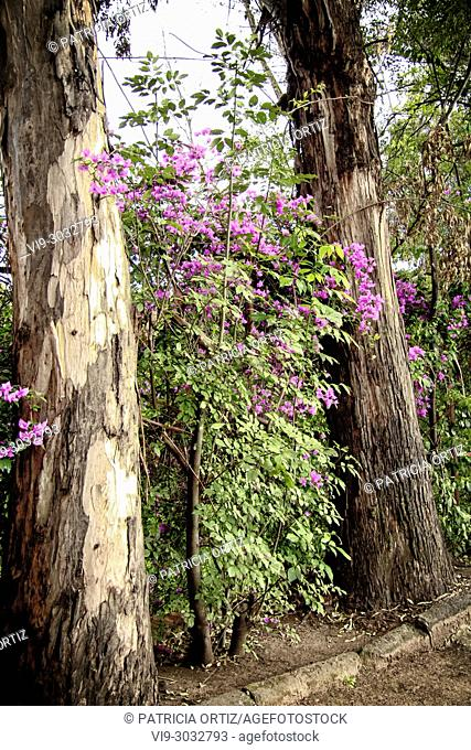 Landscape in Galindo, Querétaro, MEXICO