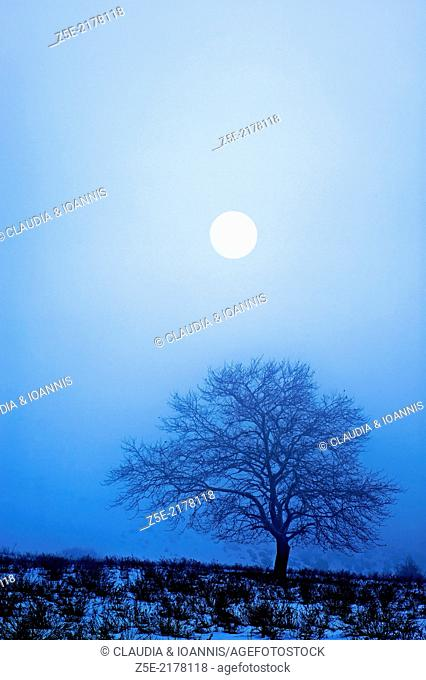 Bare tree in snowy landscape at full moon