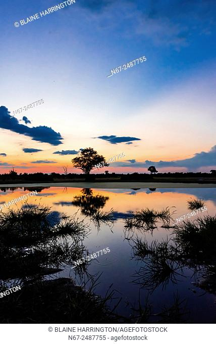Twilight at a pond, Kwando Concession, Linyanti Marshes, Botswana
