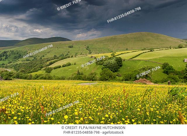 View across meadow towards stormclouds gathering over hill, Wandale Hill, Howgill Fells, Cumbria, England, July