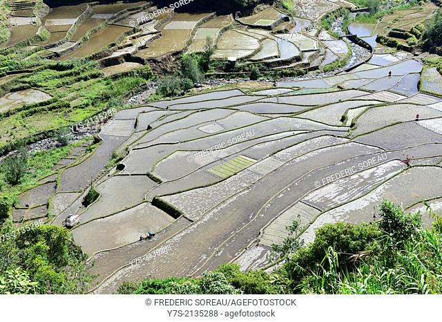 Rice paddies in Banaue, Philippines,South East Asia