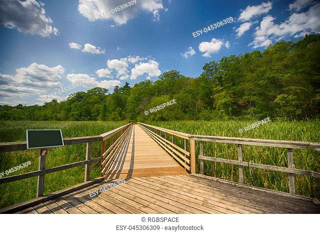 View of walkway in marshland landscape during summer time