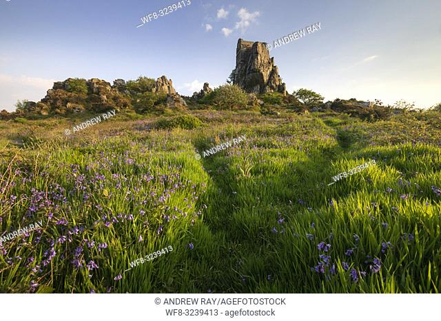 Bluebells at Roche Rock in Cornwall captured on an evening in late May. The image was carefully composed with the foreground footpaths leading the viewers eye...