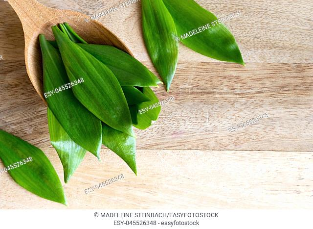 Young wild garlic (Allium ursinum) leaves on a wooden spoon with copy space