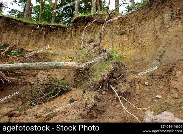 Slide Soil Erosion, Row of Trees Exposed to Seaside Cliff Face Erosion with Crumbling Earth and Dirt, Climate Change Sea Levels