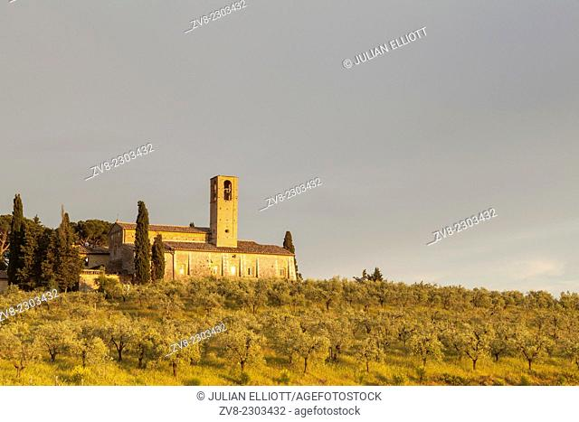 Olive groves below the Abbey of Monte Oliveto Maggiore near to San Gimignano, Tuscany