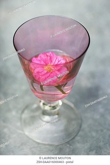 Flower floating in glass of water