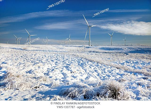 Whitelee Wind Turbine farm, in winter with snow and hoarfrost, Eaglesham Moor, Glasgow, Scotland  Whitelee Farm is the largest windfarm in Europe with 140...