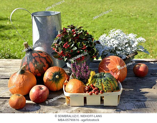 autumnal decoration with pumpkins and plants