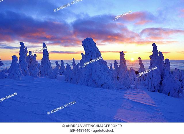 Sunrise on the Brocken, winter, snow-covered pines, above the clouds, Harz National Park, Saxony-Anhalt, Germany