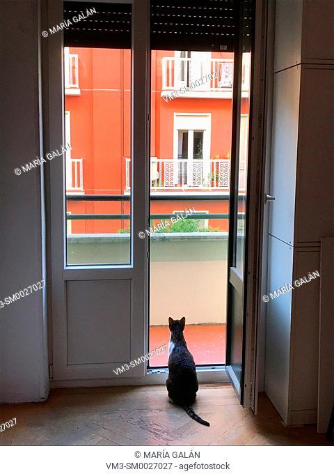 Cat at home, looking through an open door