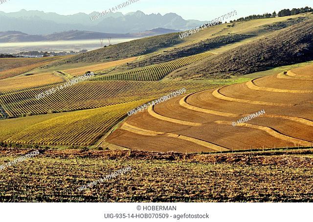 Durbanville Hills, Cape Wine Route, Durbanville, Western Cape