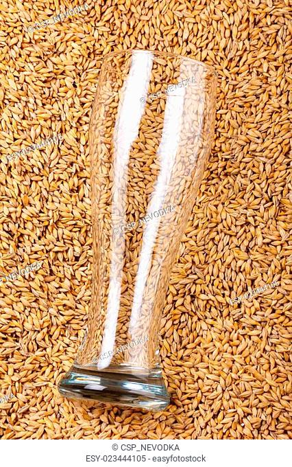 Empty clean beer glass on barley