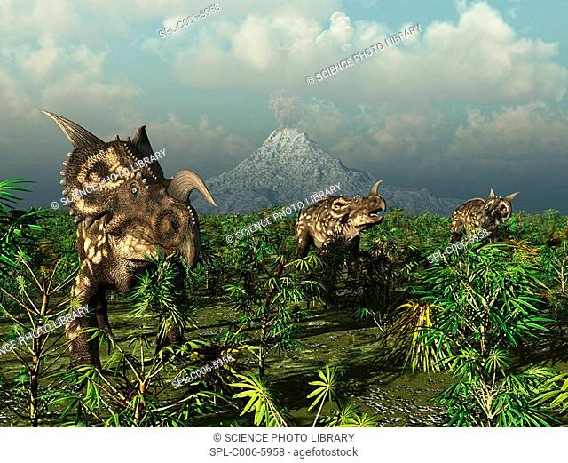 Einiosaurus dinosaurs. Computer artwork of a herd of plant-eating Einiosaurus roaming the plains in what is now the Two Medicine Formation in northwestern...