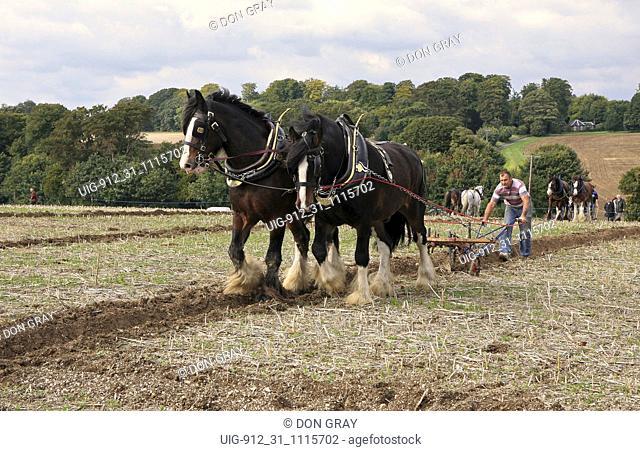 Horse ploughing; East Kent ploughing match; Waldershare Park, UK