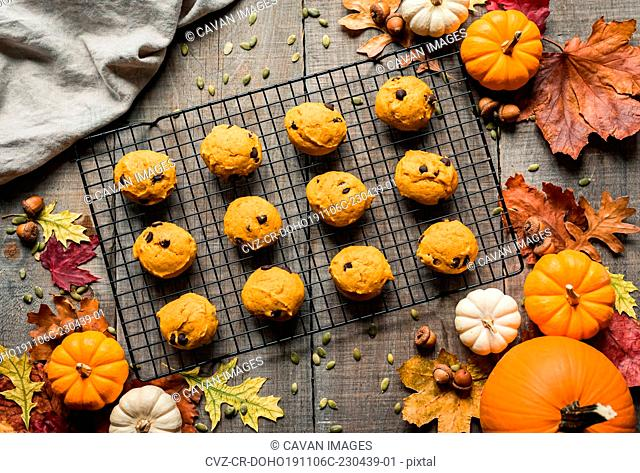 Overhead view of pumpkin chocolate chip cookies on a cooling rack