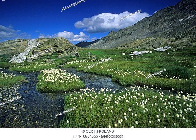 Laghetti Laiozz, Switzerland, Canton of Ticino, valley, bog, meadow, wetland, natural, cotton grass, summer, brook, Landscape, scenery, nature, alps, alpine