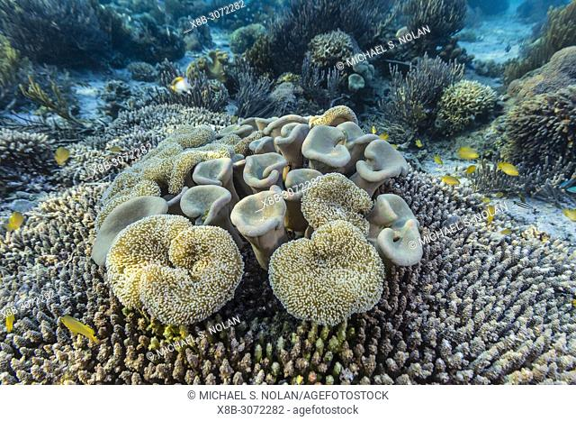 A profusion of hard and soft corals on Sebayur Island, Komodo National Park, Flores Sea, Indonesia