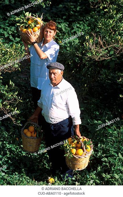Orange growers, Ribera, Sicily, Italy