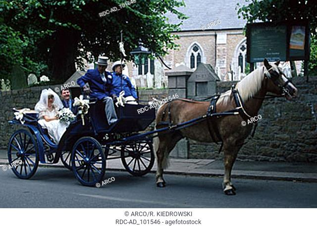Bride and groom in horse coach Trinity Jersey Channel Islands Great Britain