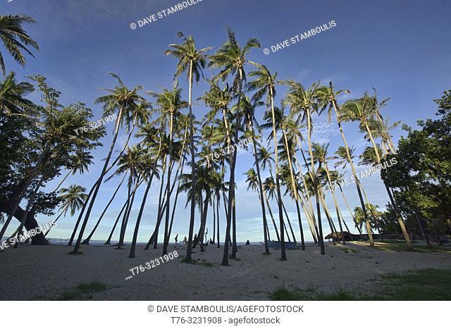 Coconut palms in morning light, Saud Beach, Pagudpud, Luzon, Philippines