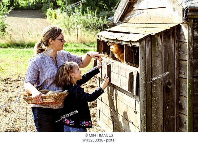 Woman and girl collecting eggs from a chicken house