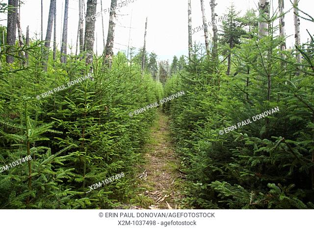 Pemigewasset Wilderness - Nancy Pond Trail during the summer months  This trail is an old railroad bed once used by the East Branch & Lincoln Railroad during...