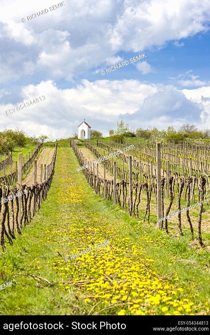 vineyards near Hnanice, Znojmo region, Czech Republic