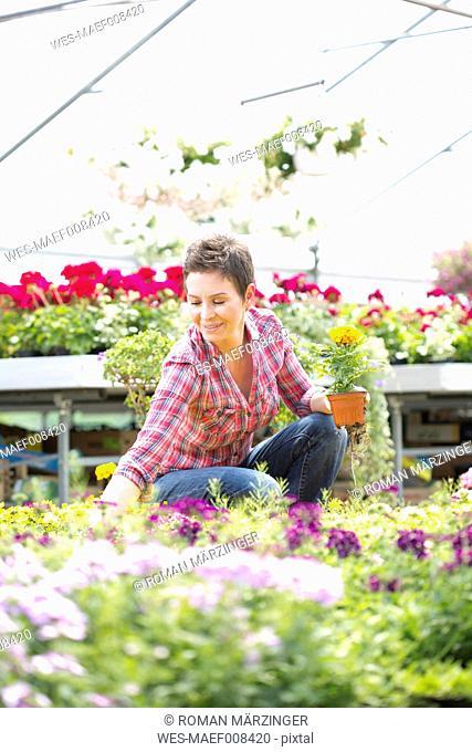Female gardener working in greenhouse