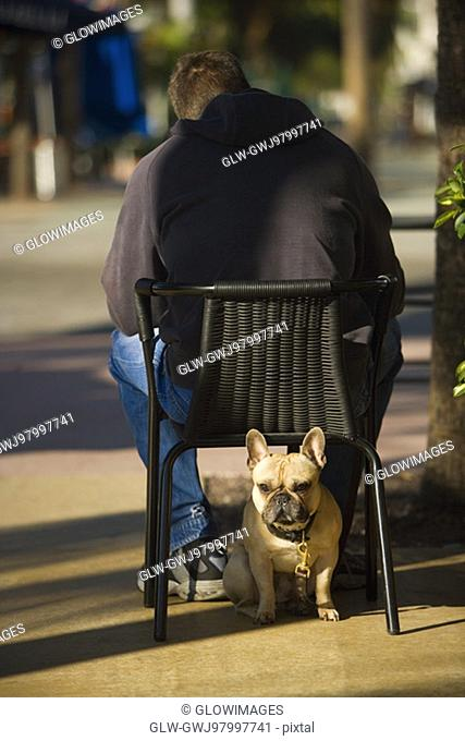 Rear view of a man sitting on a chair with a dog under it