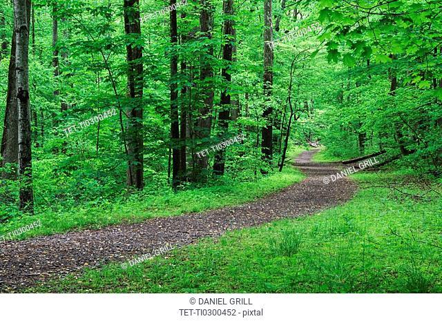 A scenic and empty path