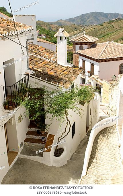 Traditional houses and street with plants and whitewashed walls, Sedella, La Axarquia, province of Malaga, region of Andalucia, Spain