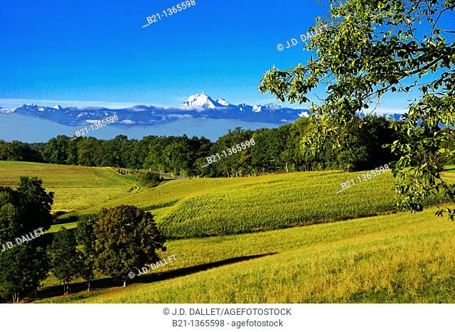 View on the Pyrenees mountains and Pic du Midi, from near Marciac, Gers, Midi-Pyrenees, France