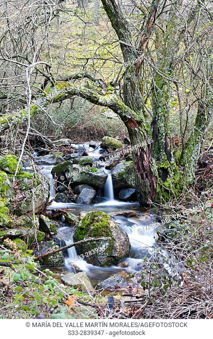 Hornillo stream in the Sierra de Guadarrama. Robledondo. Madrid. Spain. Europe