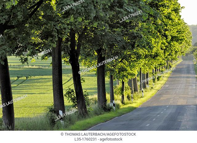 Typical German country road near Goslar, Lower Saxony, Germany