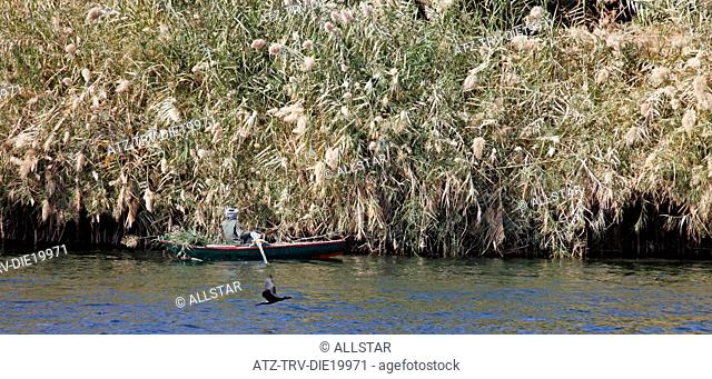 MUSLIM MAN IN ROWING BOAT & PAMPAS GRASS; RIVER NILE, EGYPT; 09/01/2013