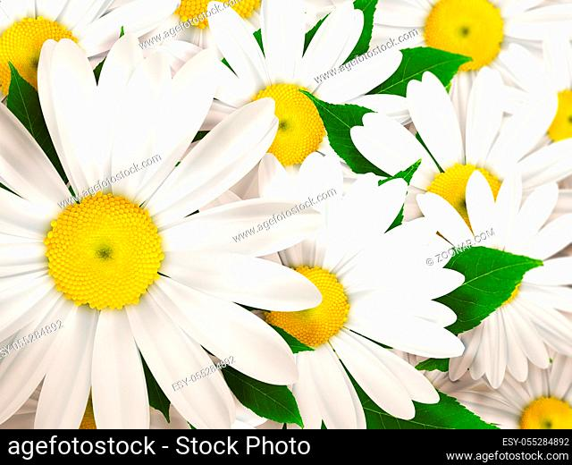 abstract nature background with camomiles